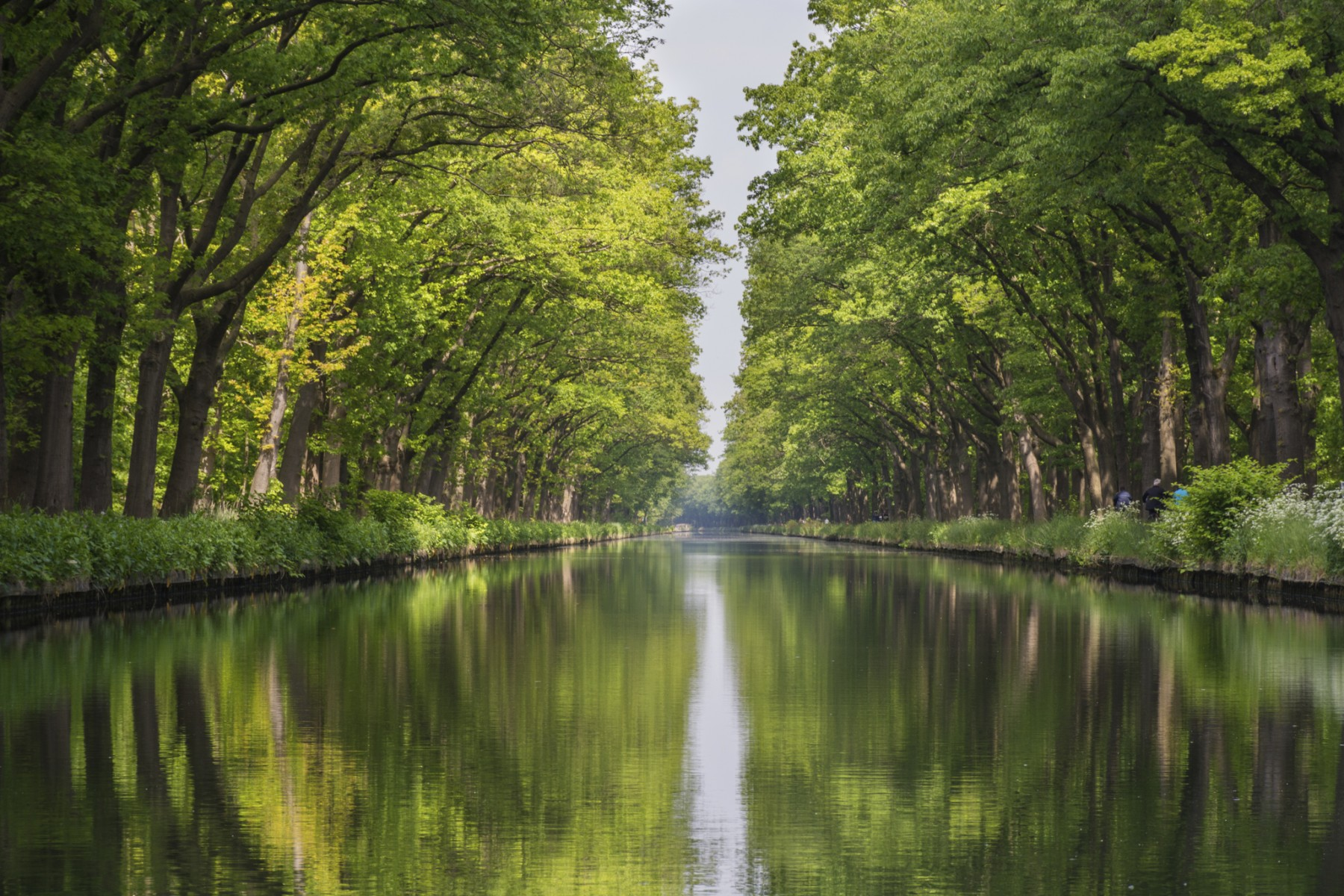 River lined with trees